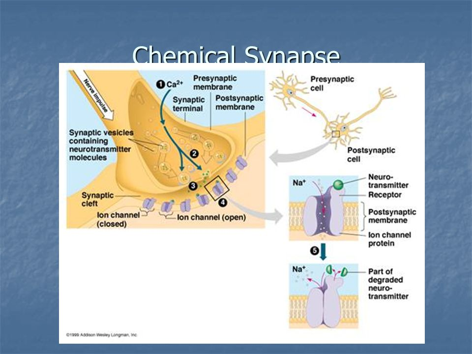 Chemical Synapse 41