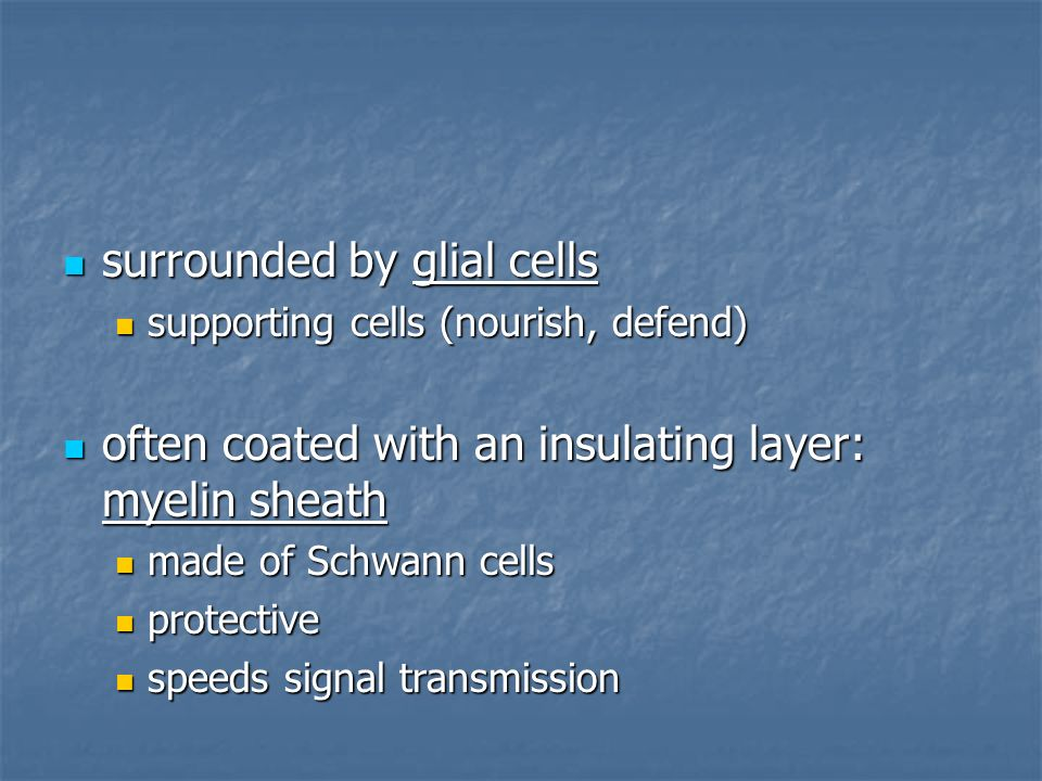 surrounded by glial cells