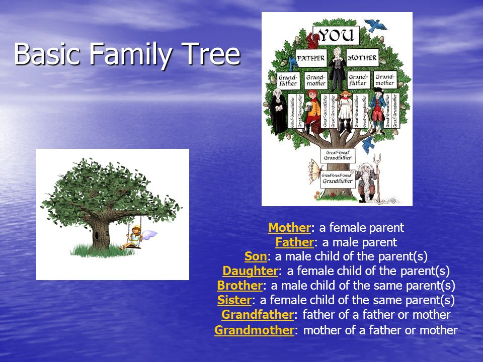 Basic Family Tree Mother: a female parent Father: a male parent