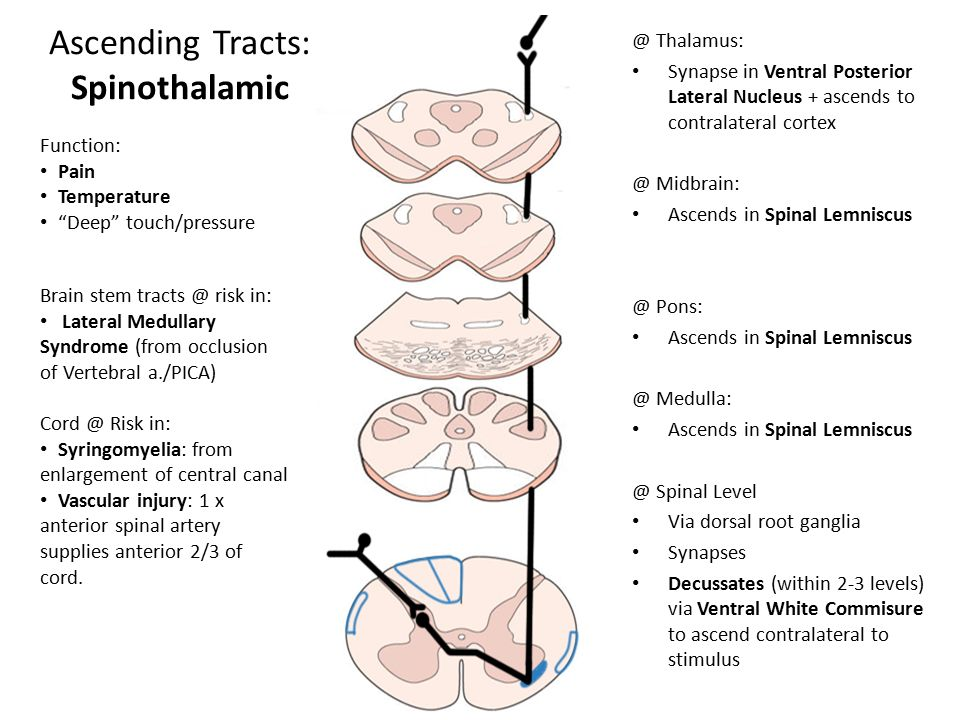ascending and descending tracts of spinal cord pdf