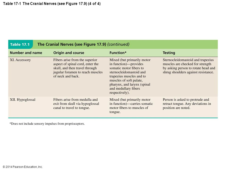 Table 17-1 The Cranial Nerves (see Figure 17.9) (4 of 4)