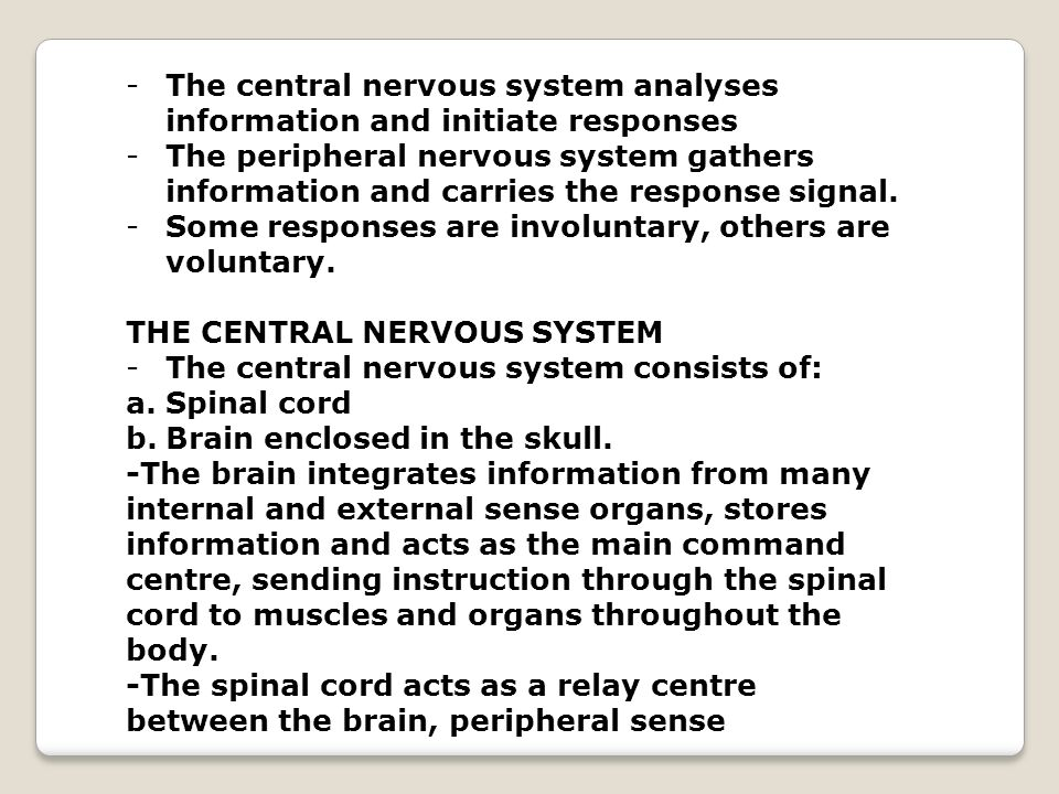 The central nervous system analyses information and initiate responses