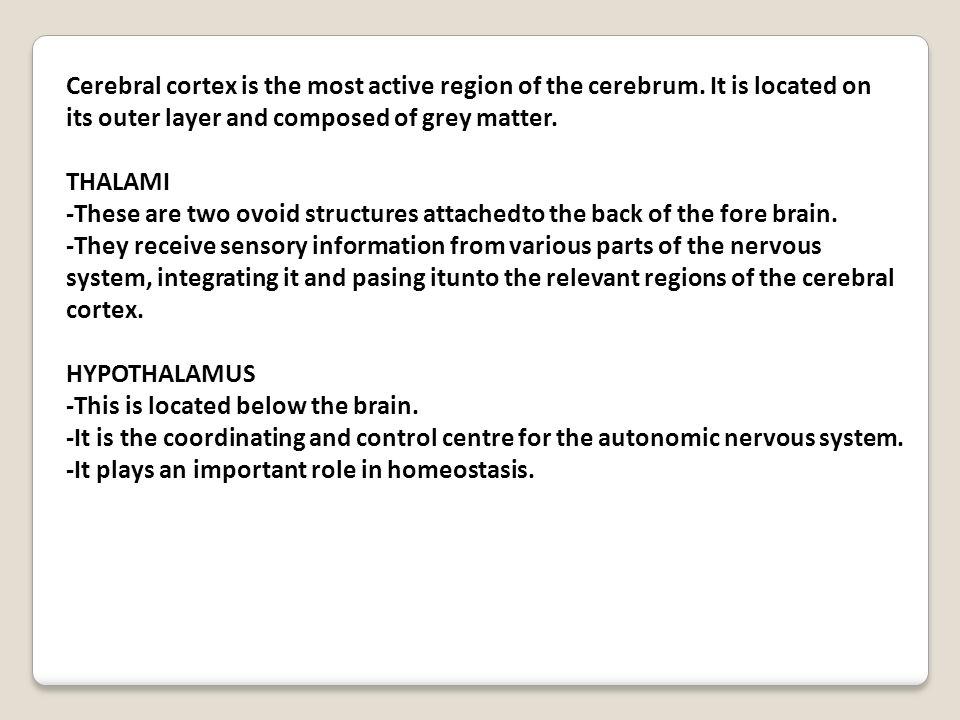 Cerebral cortex is the most active region of the cerebrum