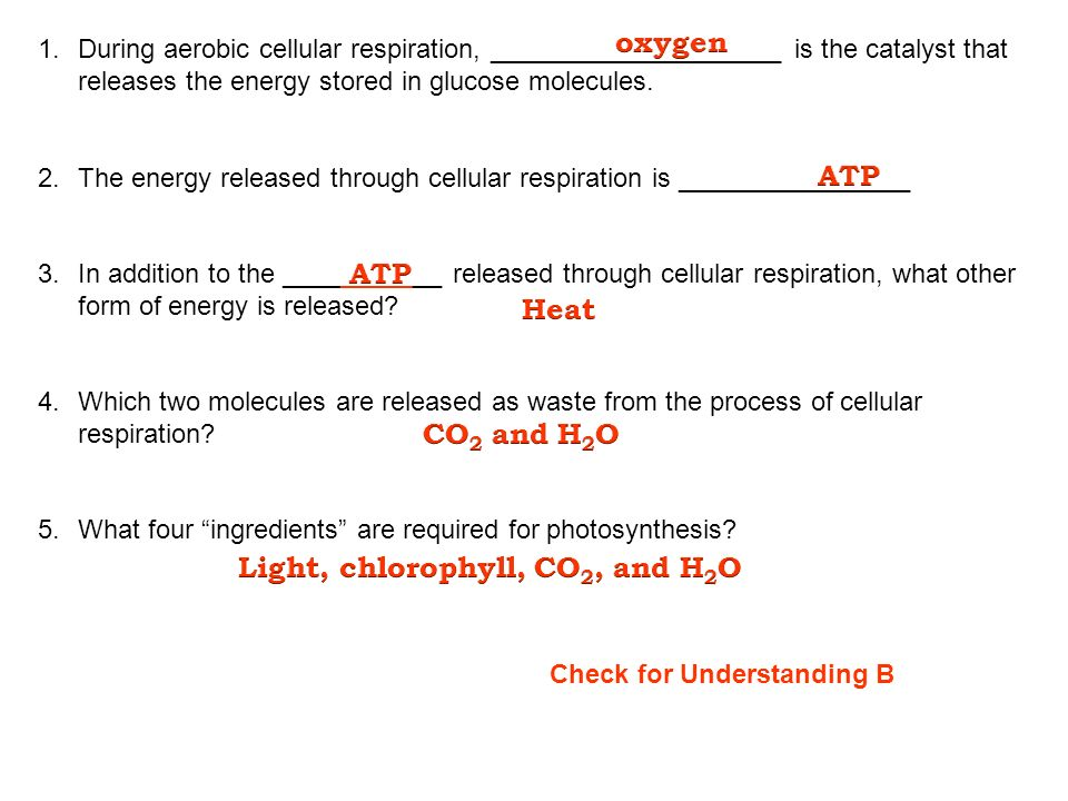 Write in your notes: I can describe different cellular processes ...