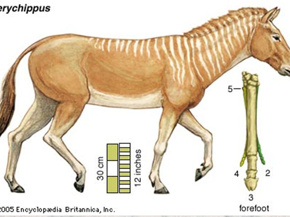 Equine Science presentation #1