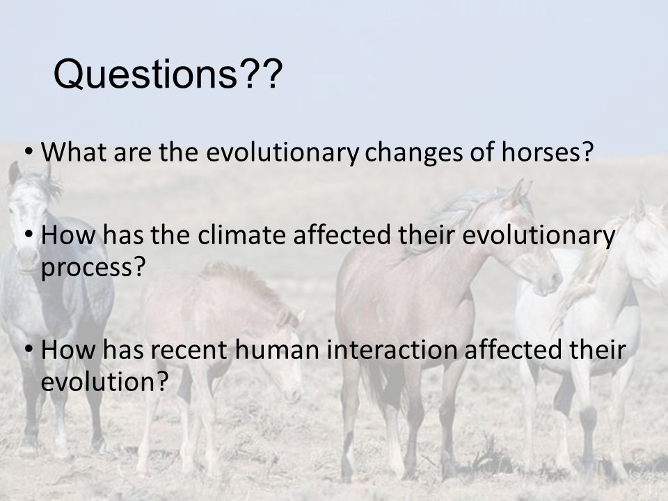 Questions What are the evolutionary changes of horses