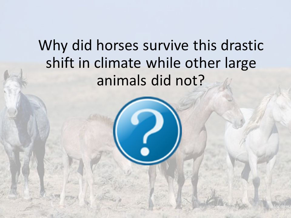 Why did horses survive this drastic shift in climate while other large animals did not