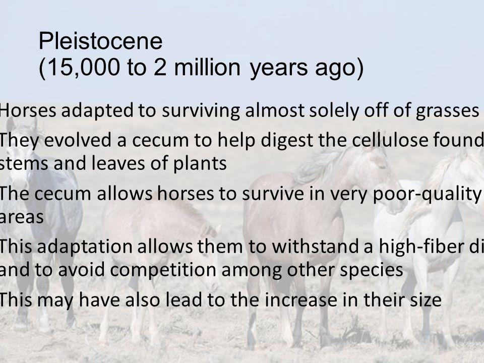 Pleistocene (15,000 to 2 million years ago)