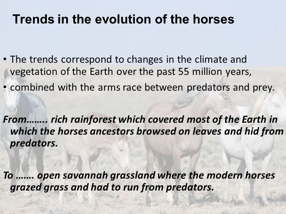 Trends in the evolution of the horses