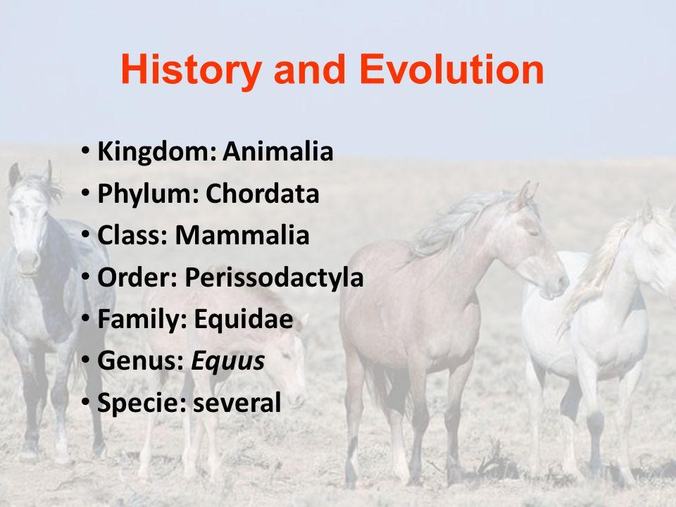 History and Evolution Kingdom: Animalia Phylum: Chordata