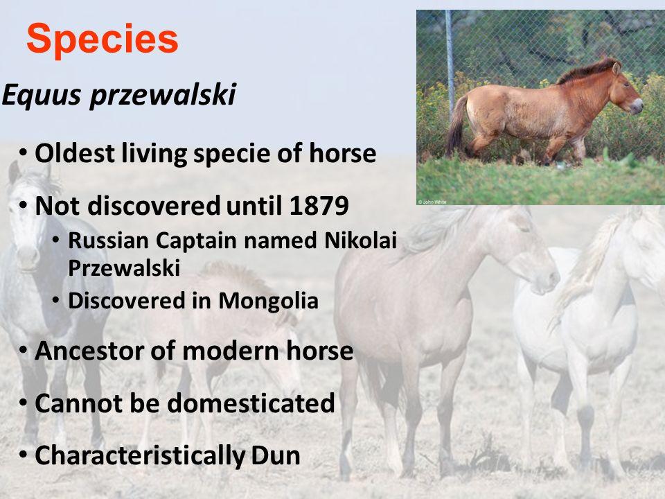 Species Equus przewalski Oldest living specie of horse
