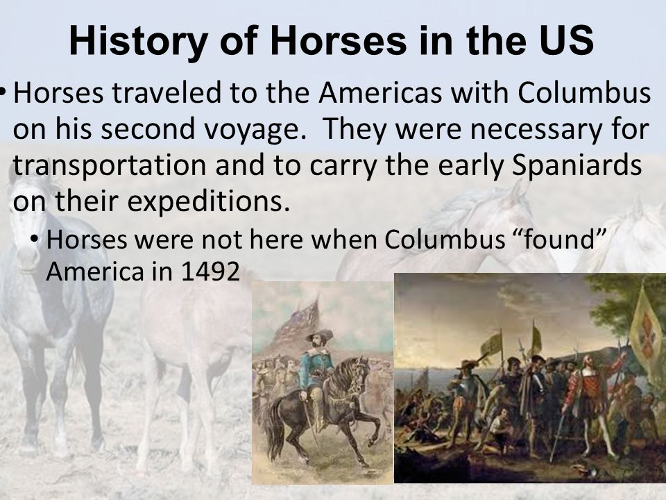 History of Horses in the US