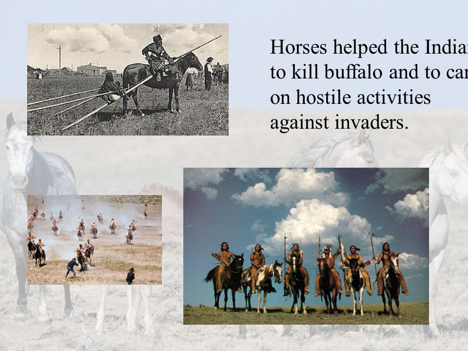 Horses helped the Indians to kill buffalo and to carry on hostile activities against invaders.