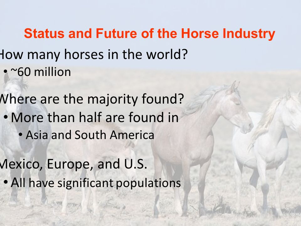 Status and Future of the Horse Industry