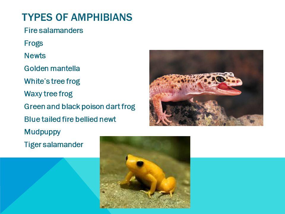 Top 10 Biggest Animals in the World  OneKindPlanet