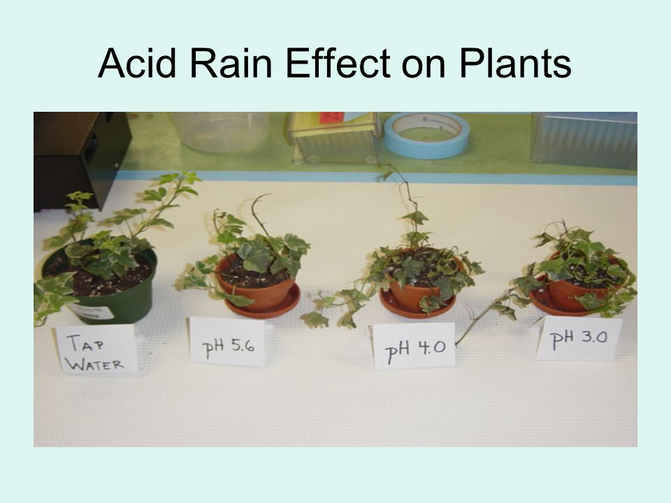 how acid rain affects organisms in How acid rain affects a food web a food web is a diagram that explains the  feeding relationships between different plants and animals in an ecosystem.