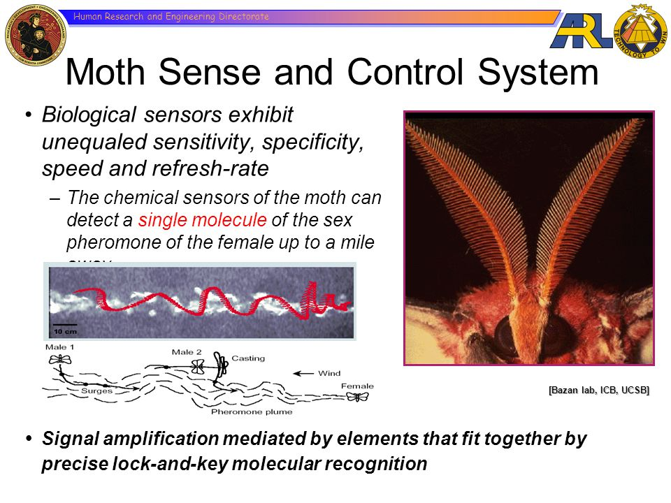 Moth Sense and Control System