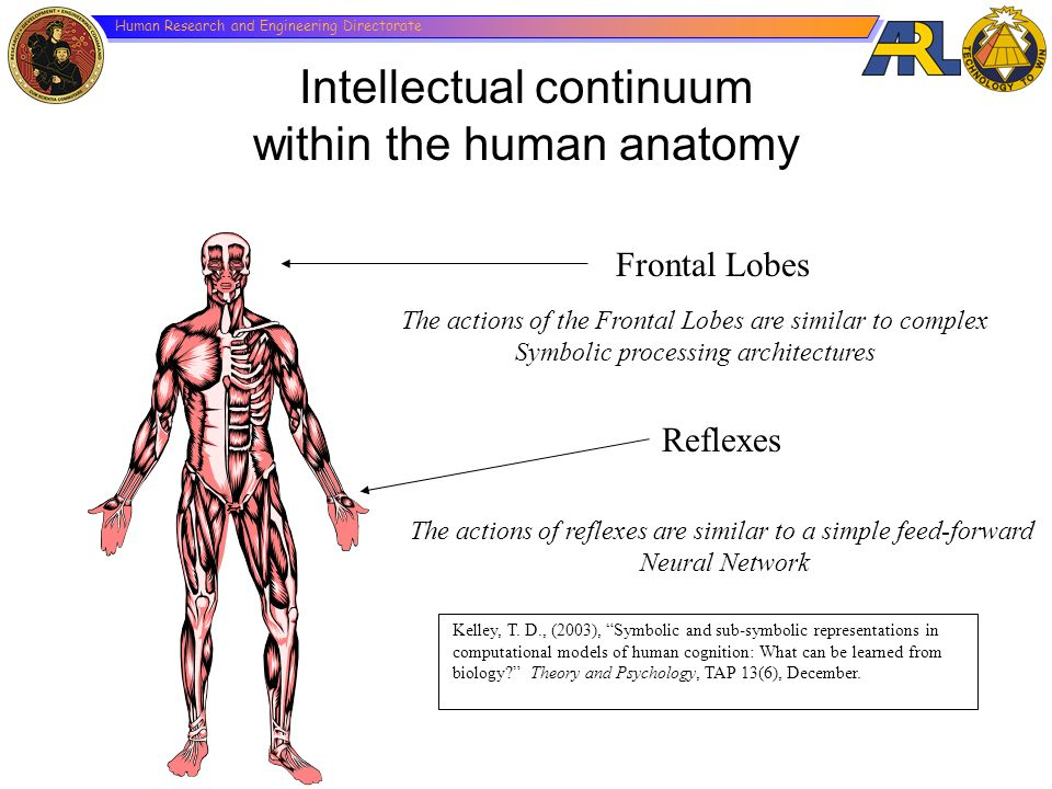 Intellectual continuum within the human anatomy