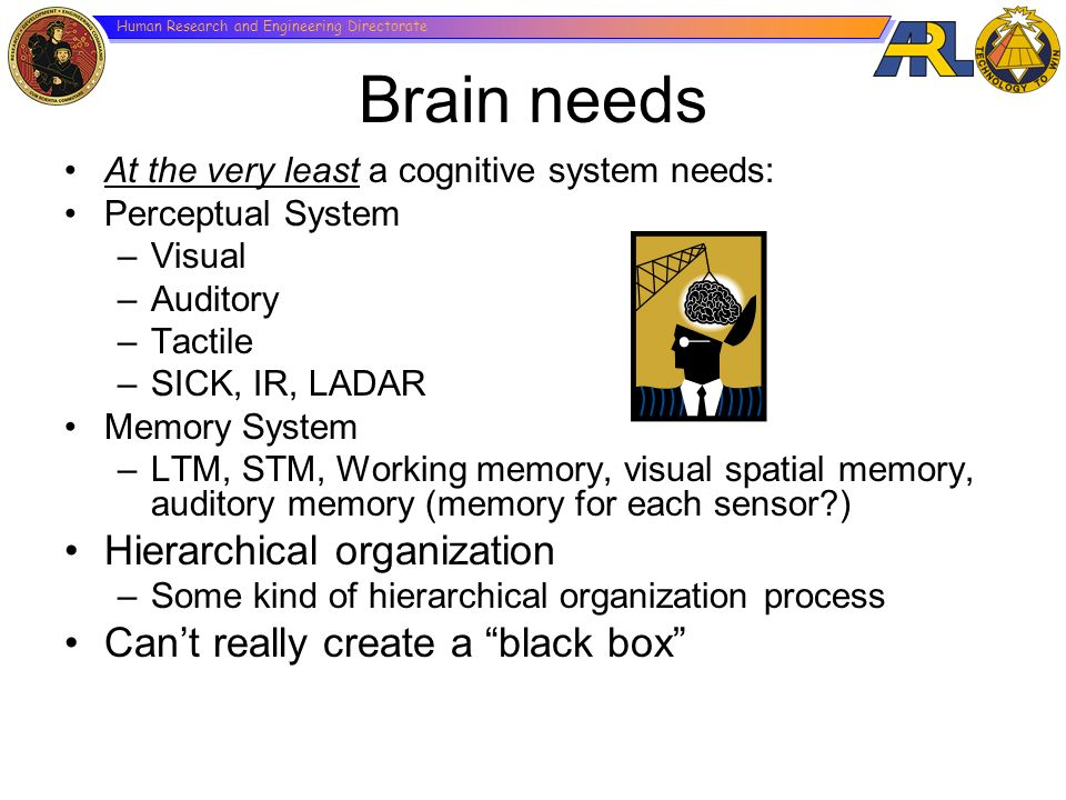 Brain needs Hierarchical organization