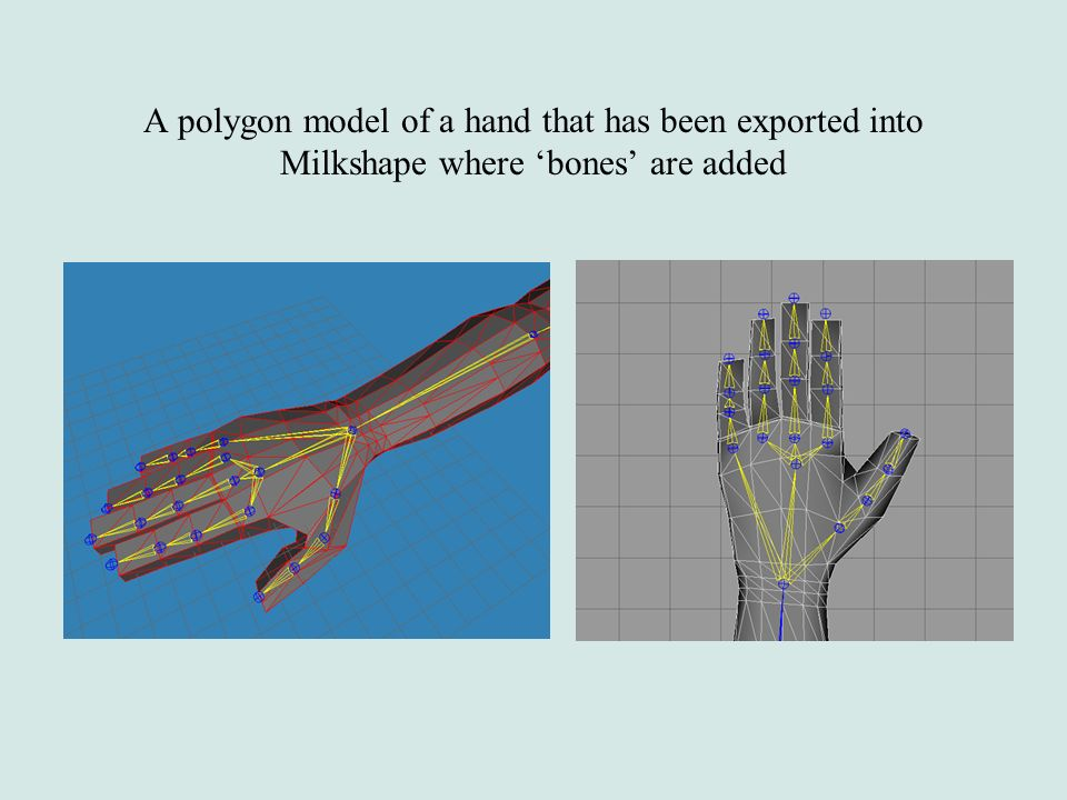 A polygon model of a hand that has been exported into Milkshape where 'bones' are added