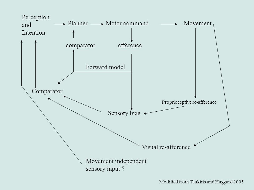 Perception and Intention Planner Motor command Movement