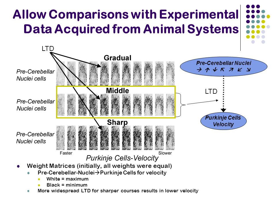 Allow Comparisons with Experimental Data Acquired from Animal Systems