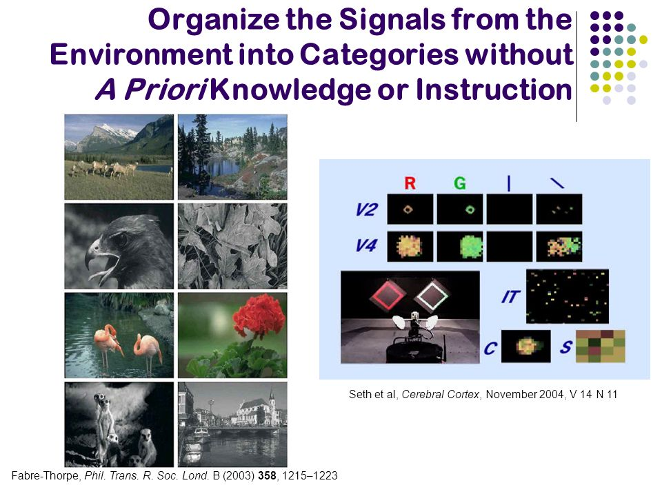Organize the Signals from the Environment into Categories without A Priori Knowledge or Instruction