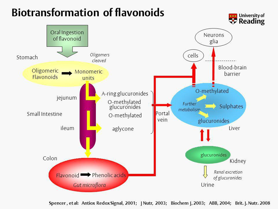 Biotransformation of flavonoids