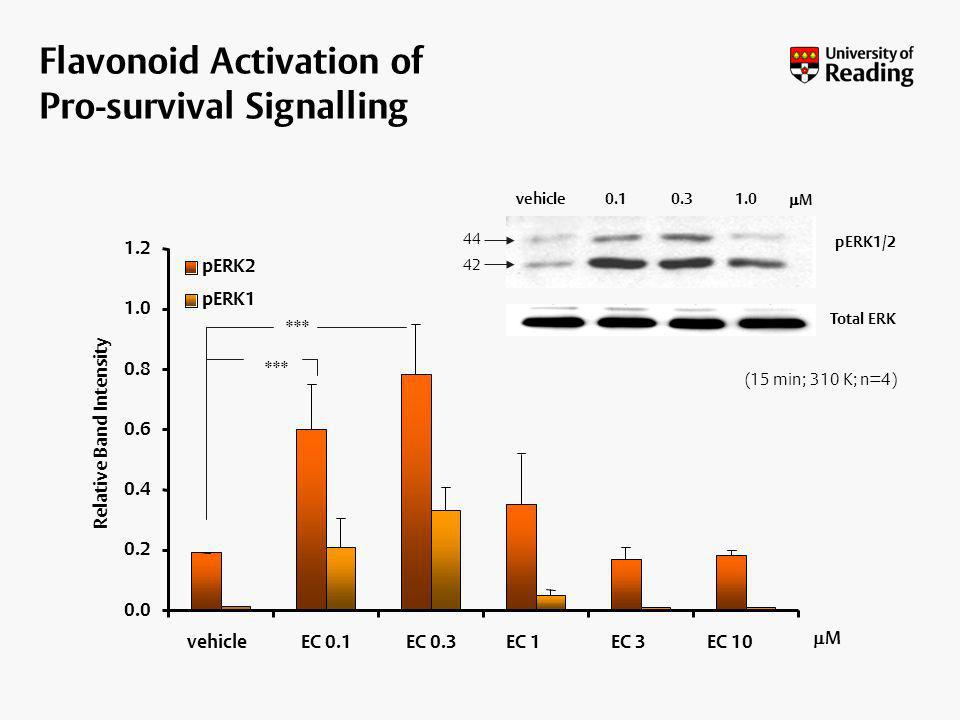 Flavonoid Activation of Pro-survival Signalling