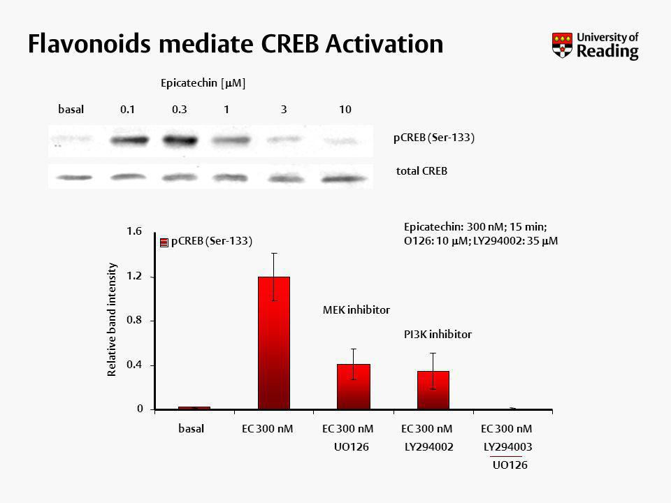 Flavonoids mediate CREB Activation