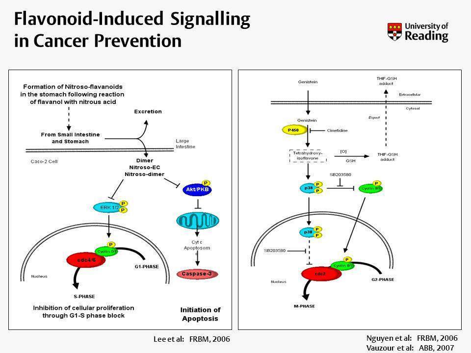 Flavonoid-Induced Signalling in Cancer Prevention
