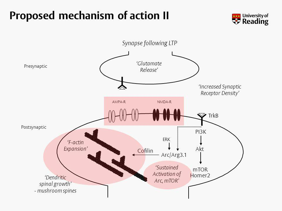 Proposed mechanism of action II