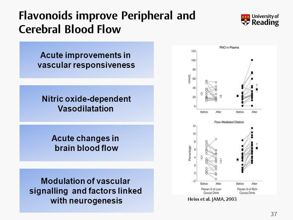 Flavonoids improve Peripheral and Cerebral Blood Flow