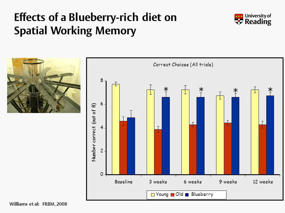 Effects of a Blueberry-rich diet on Spatial Working Memory