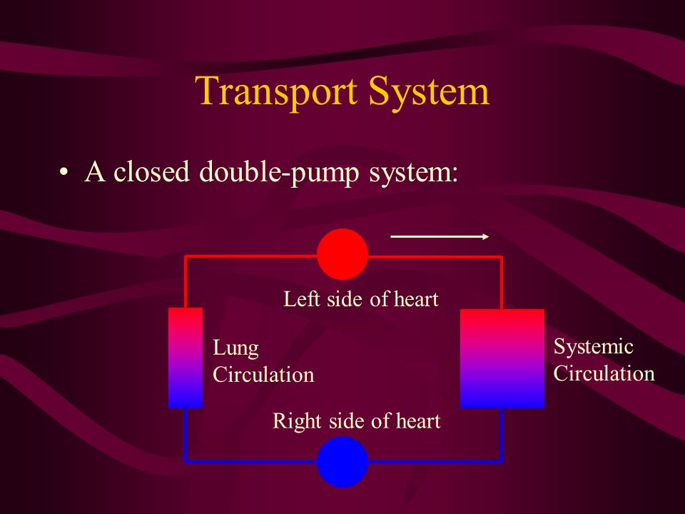 Transport System A closed double-pump system: Left side of heart Lung