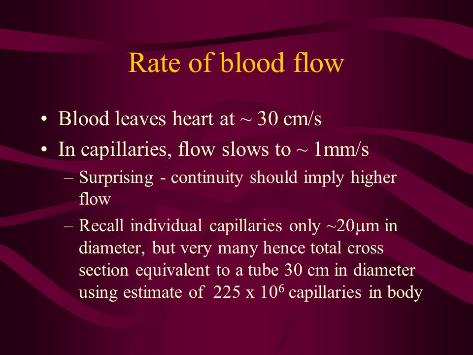 Rate of blood flow Blood leaves heart at ~ 30 cm/s