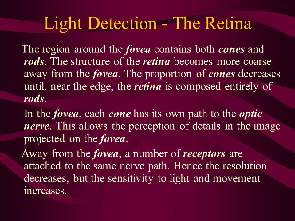 Light Detection - The Retina
