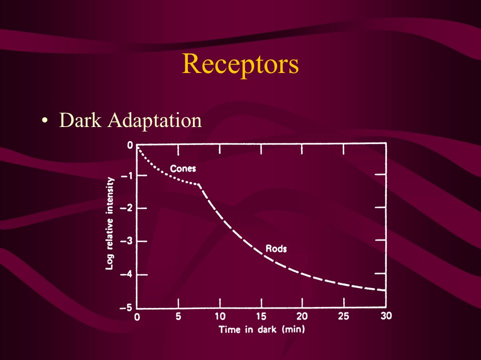 Receptors Dark Adaptation
