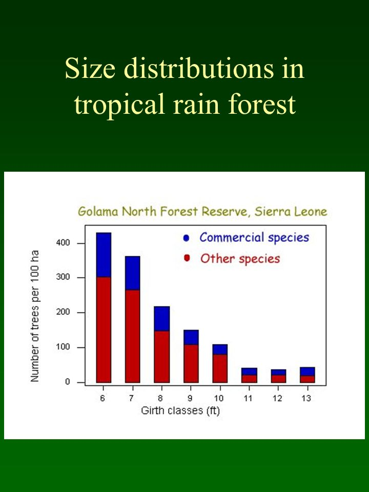 Size distributions in tropical rain forest