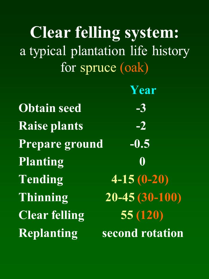 Clear felling system: a typical plantation life history for spruce (oak)