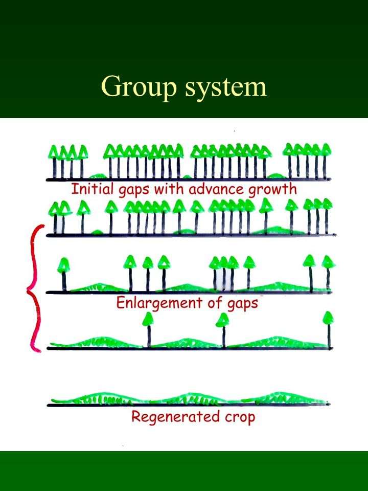 Group system
