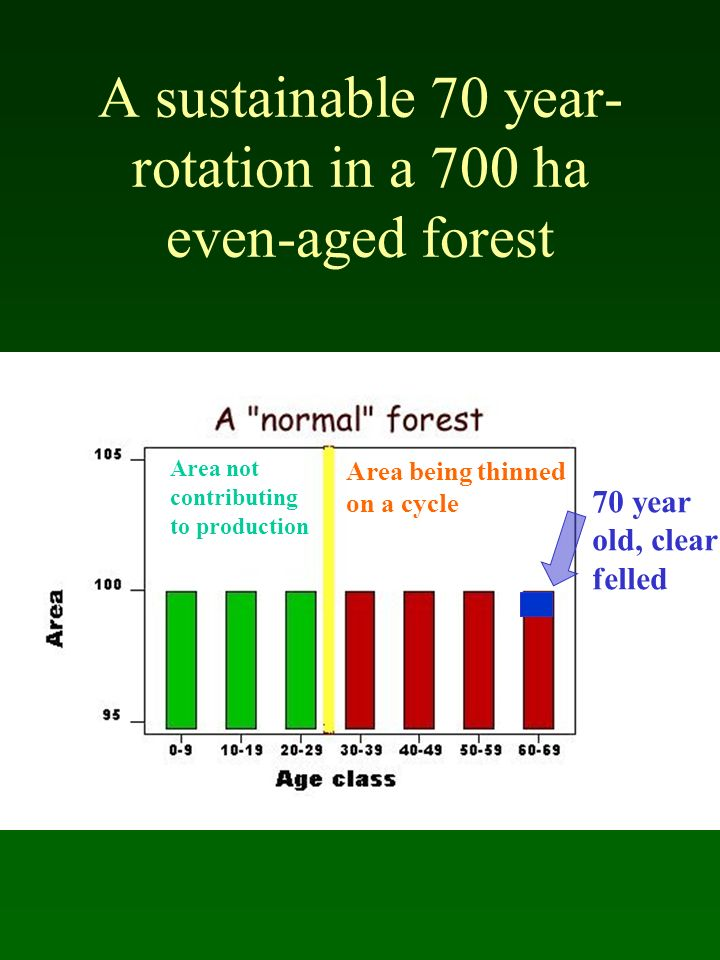 A sustainable 70 year-rotation in a 700 ha even-aged forest