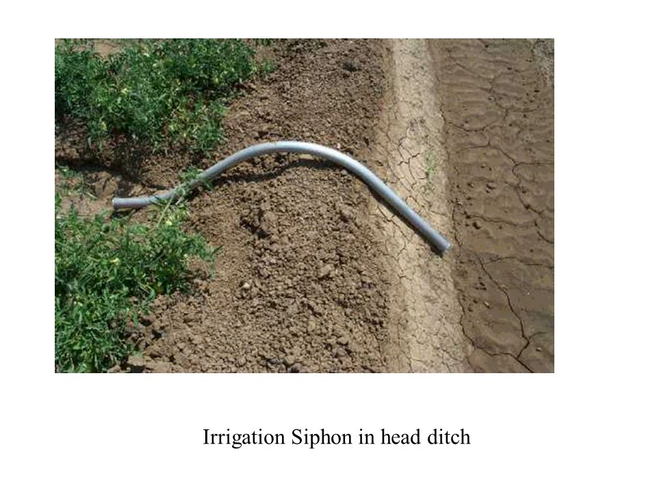 Irrigation Siphon in head ditch