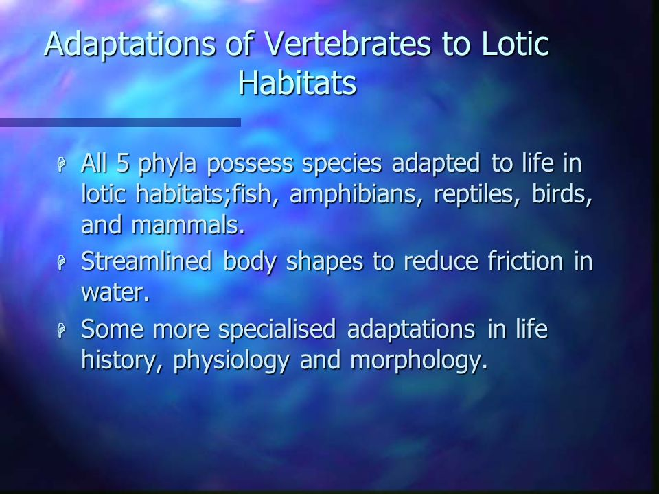 Adaptations of Vertebrates to Lotic Habitats