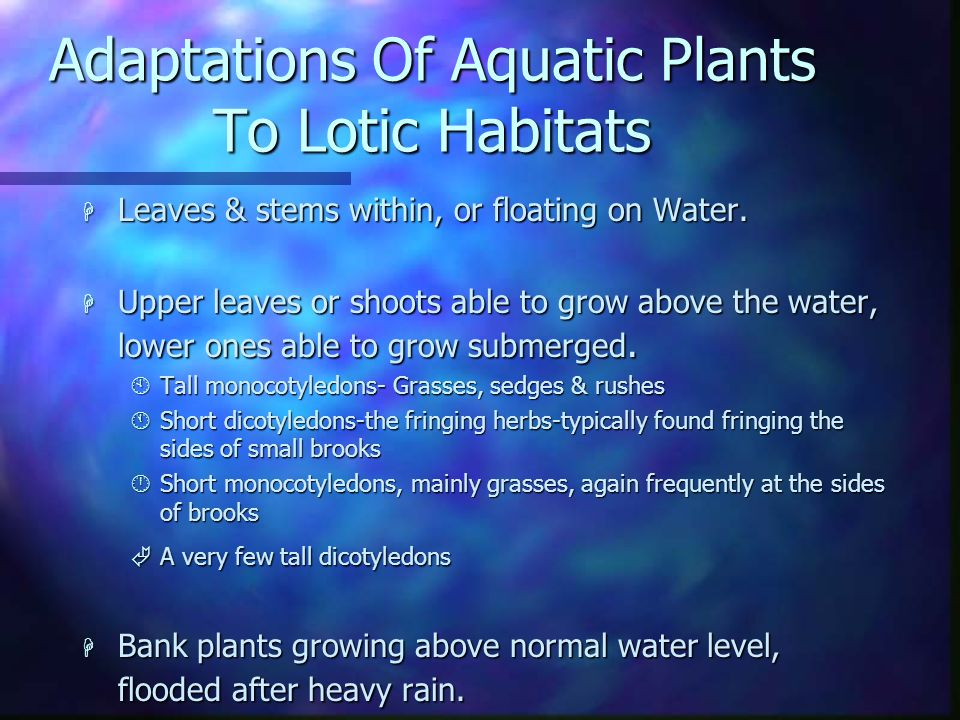 Adaptations Of Aquatic Plants To Lotic Habitats