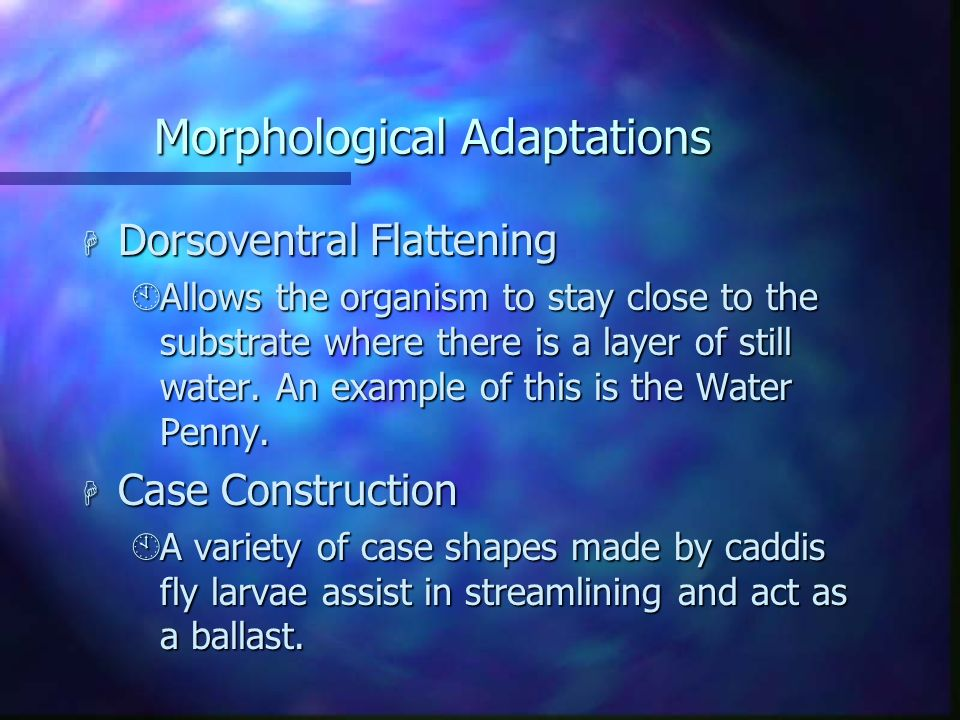 Morphological Adaptations