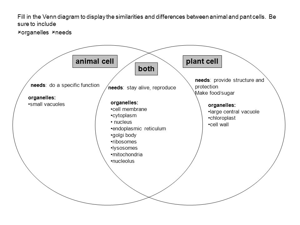 Organelles in plant and animal cells venn diagram selol ink organelles in plant and animal cells venn diagram ccuart Image collections