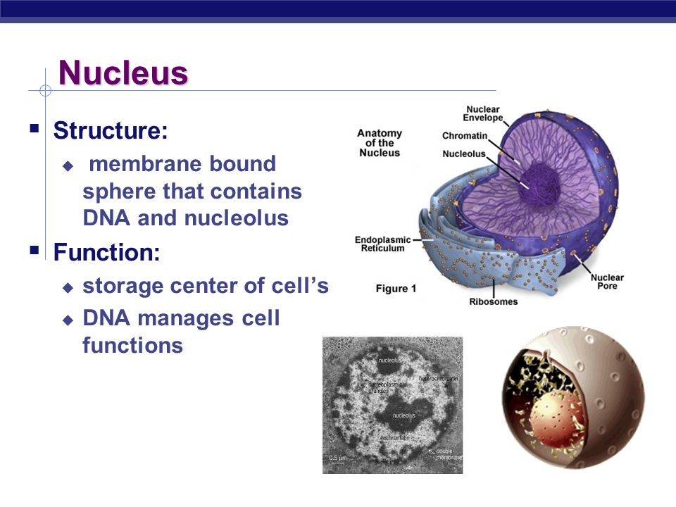 cell structure and function - ppt video online download, Human Body
