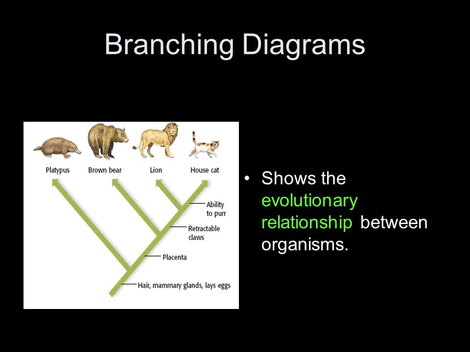 evolutionary relationships between organisms The incredible diversity of life on this planet, most of which is microbial, can only be understood in an evolutionary framework -- carl woese, 2000.