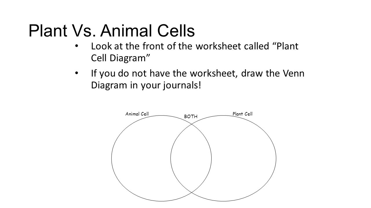 Animal vs Plant 3A ppt video online download – Plant and Animal Cell Diagram Worksheet